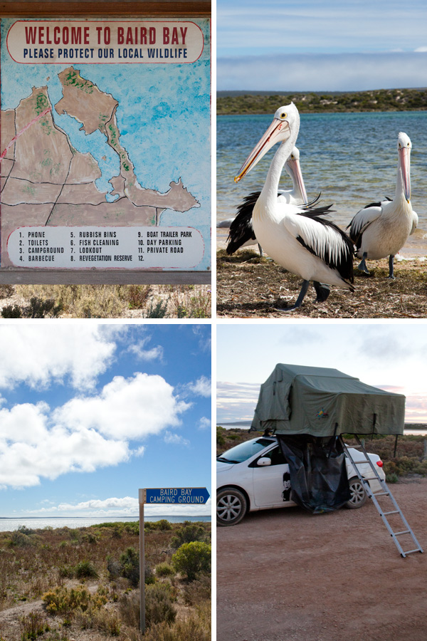 baird-bay-south-australia_camping