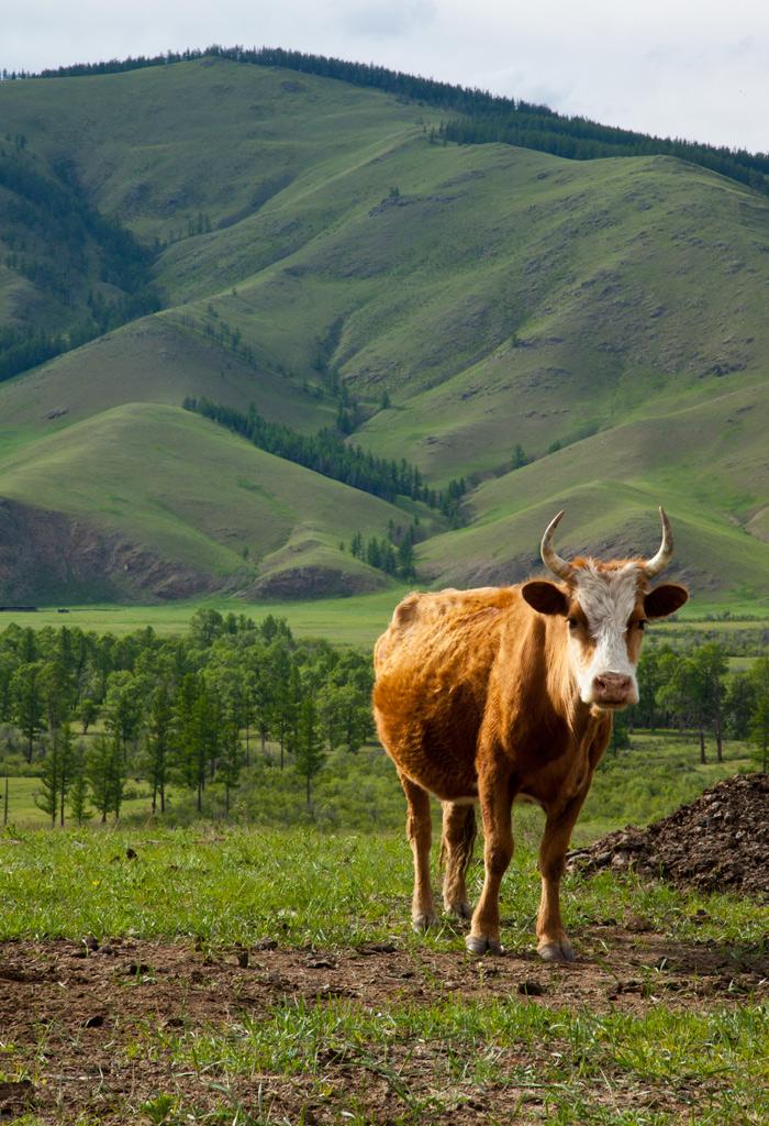 mongolia_nomads_1
